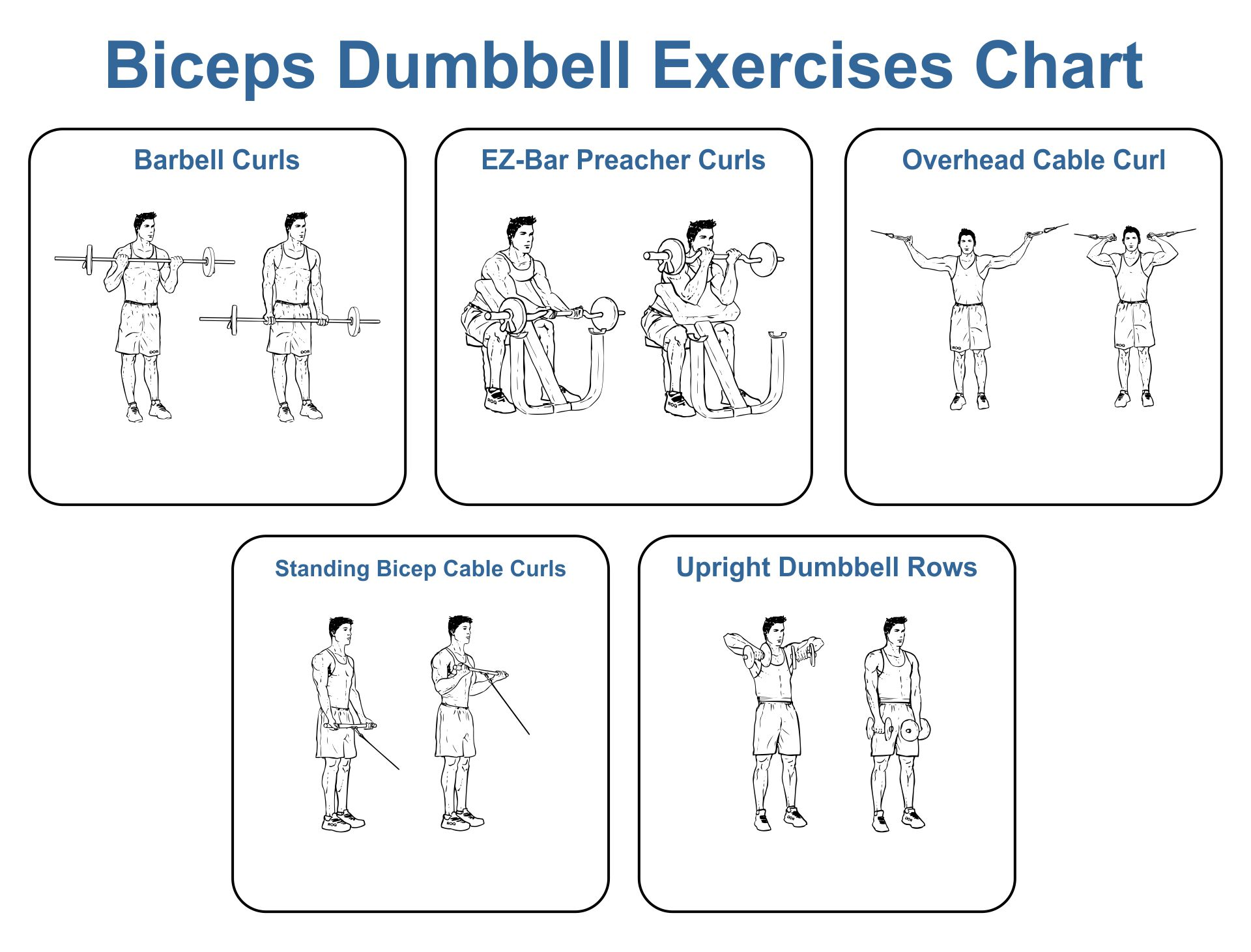 Biceps Dumbbell Exercises Chart