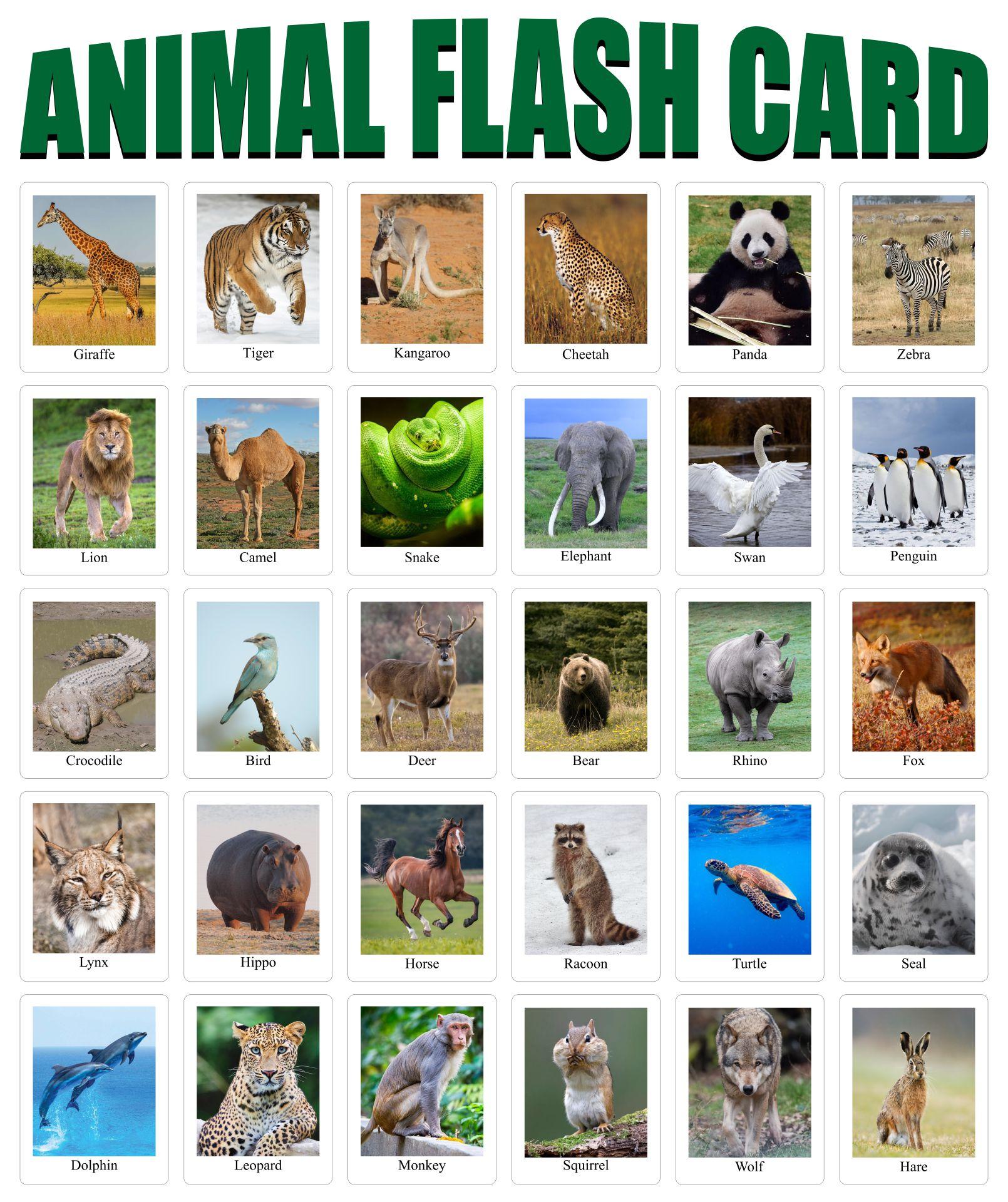 10 Best Free Printable Animal Flash Cards Printablee Com