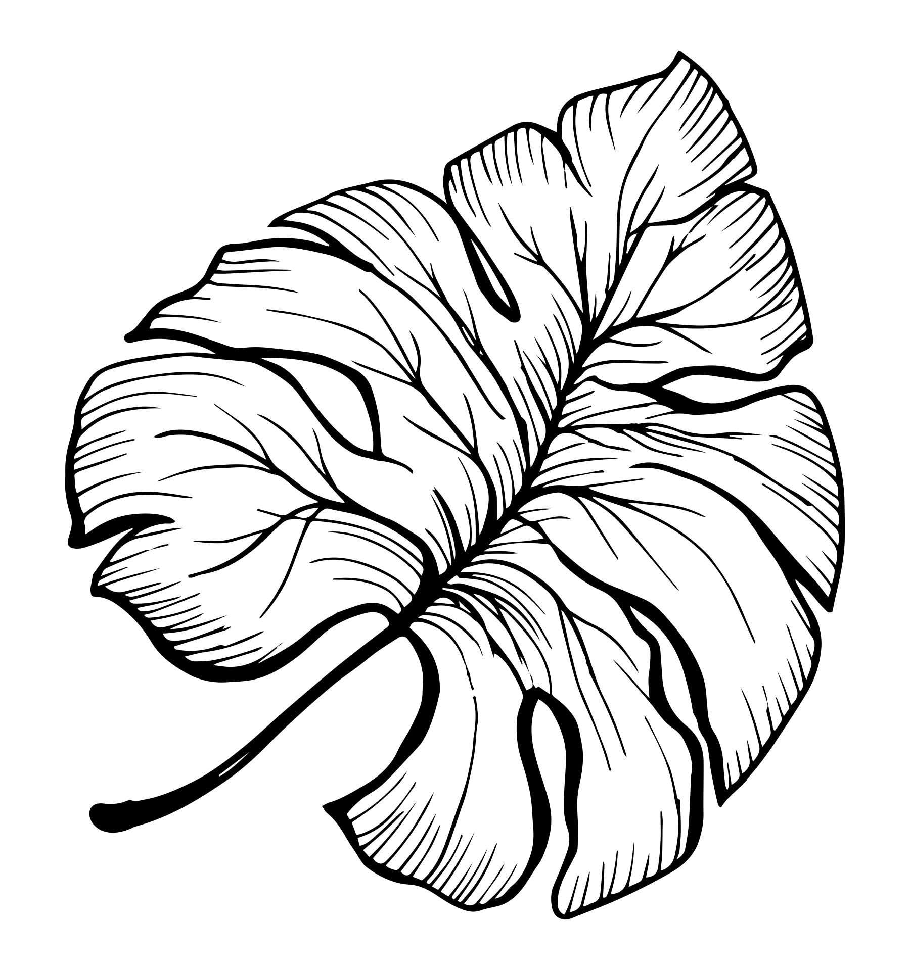 Palm Leaf Coloring Template Printable