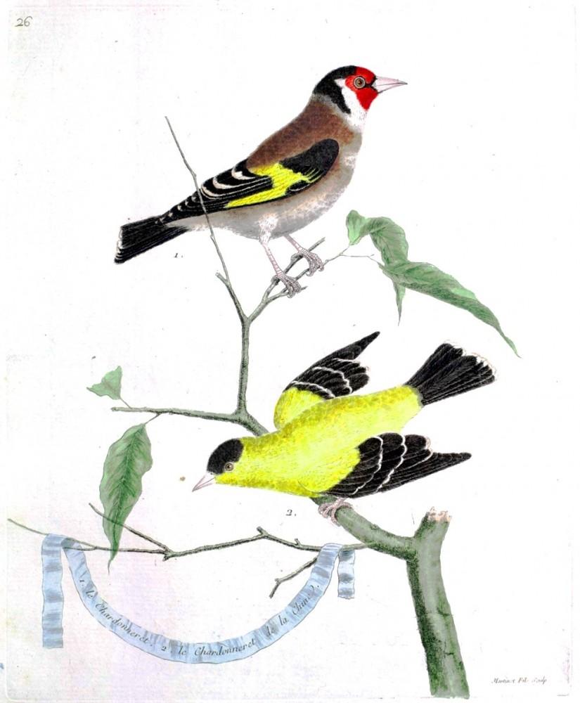 French Vintage Bird Prints