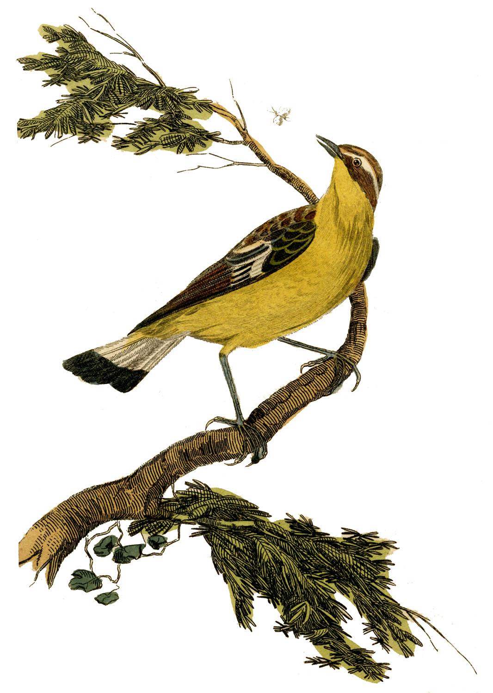 Printable Vintage Bird Prints