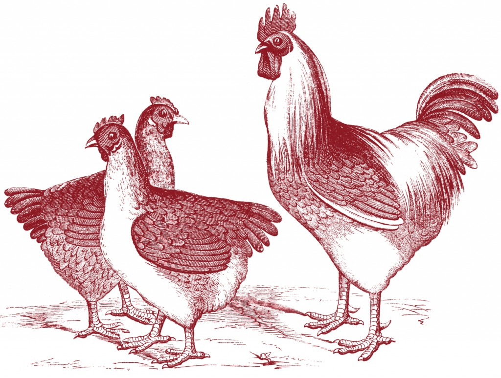 8 Images of Free Printable Vintage Chicken Art