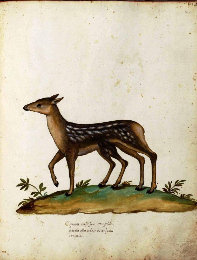 8 Images of Printable Deer Legs