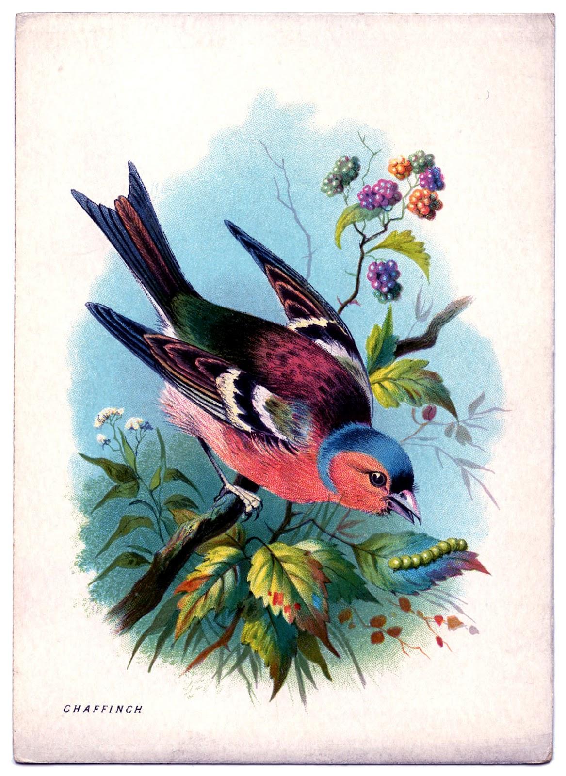 Pink Vintage Bird Clip Art