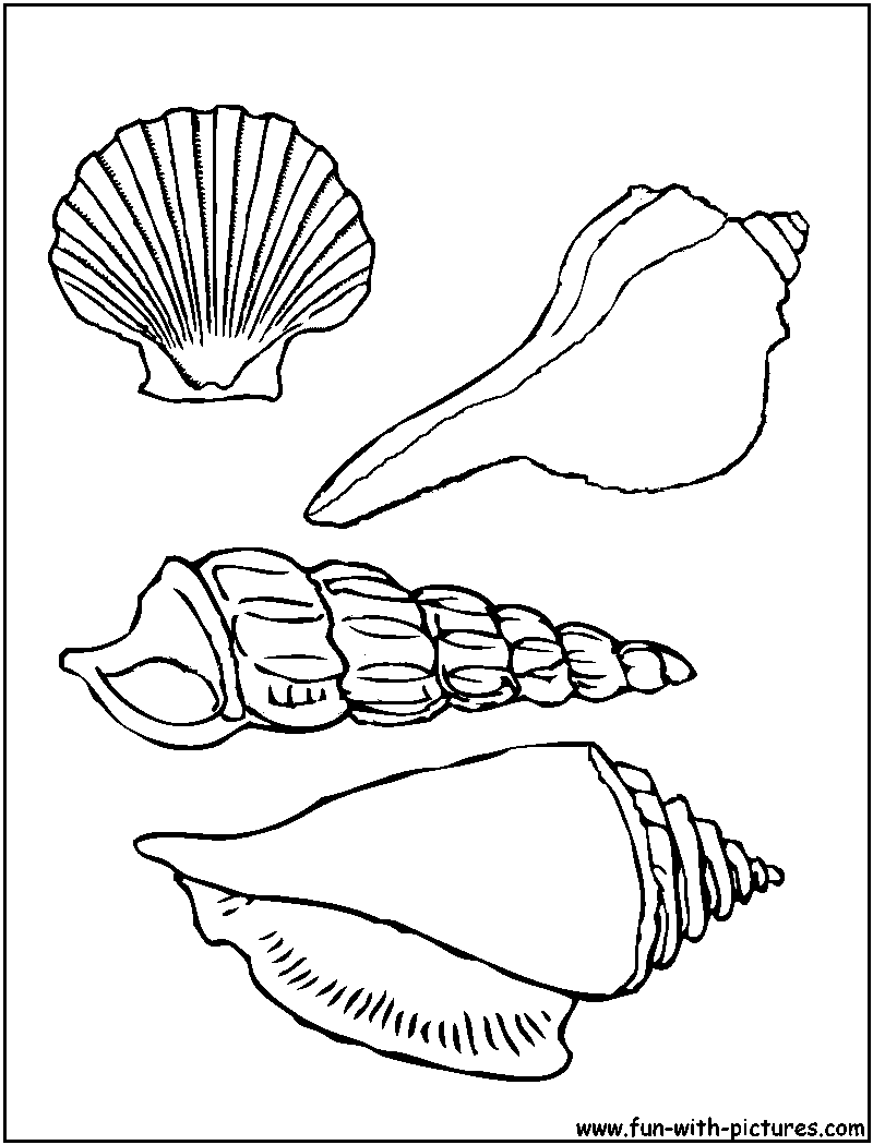 6 Images of Sea Shells Coloring Pages Printable Free