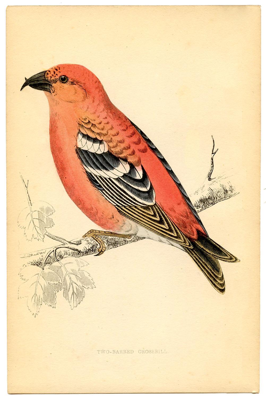 Free Printable Vintage Birds Graphics