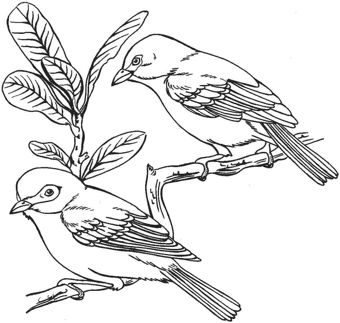 Image result for Winter Bird Coloring Pages | Bird coloring pages ... | 1125x1183