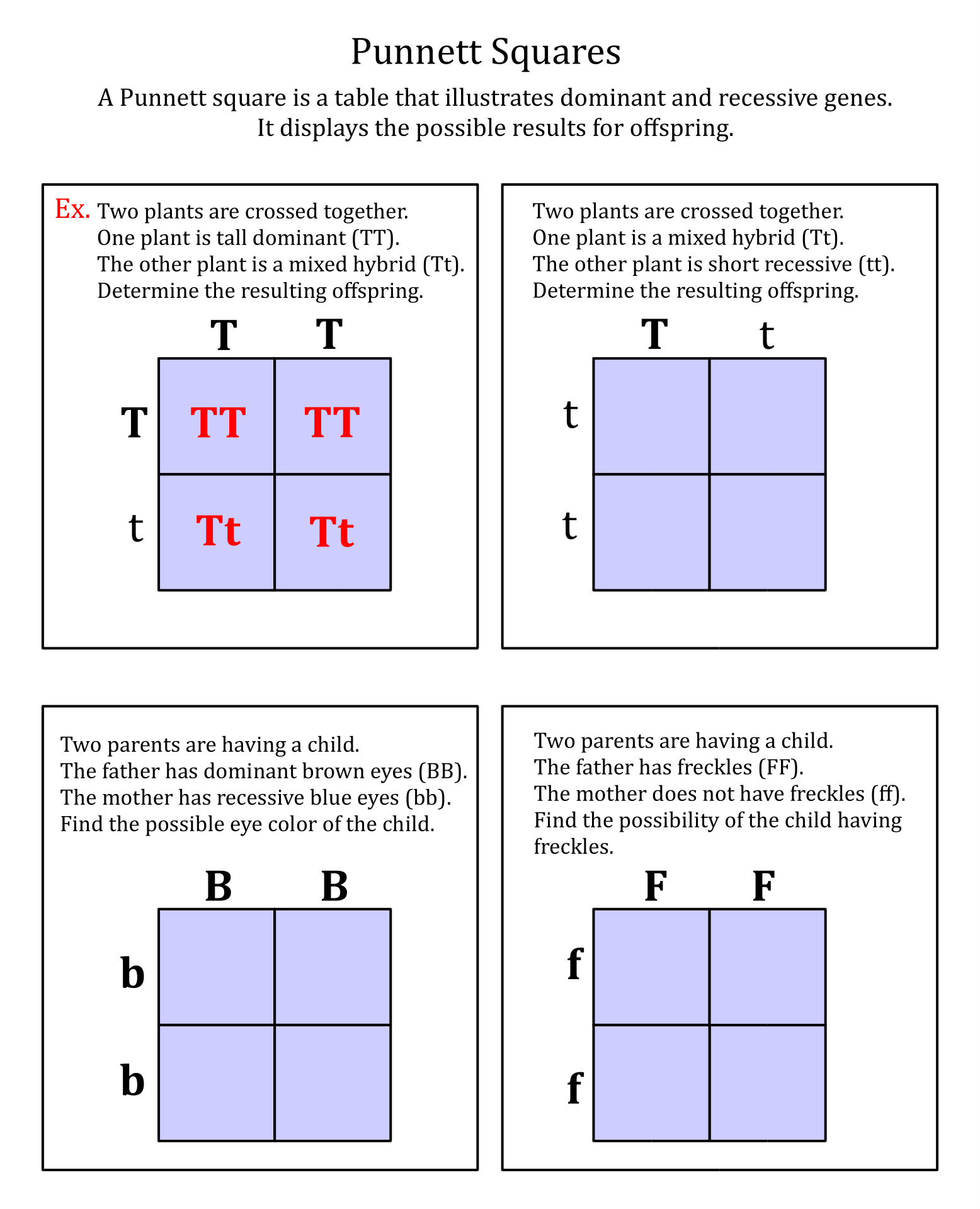 Punnett Square Worksheet For 7th Grade 5 best images of printable ...
