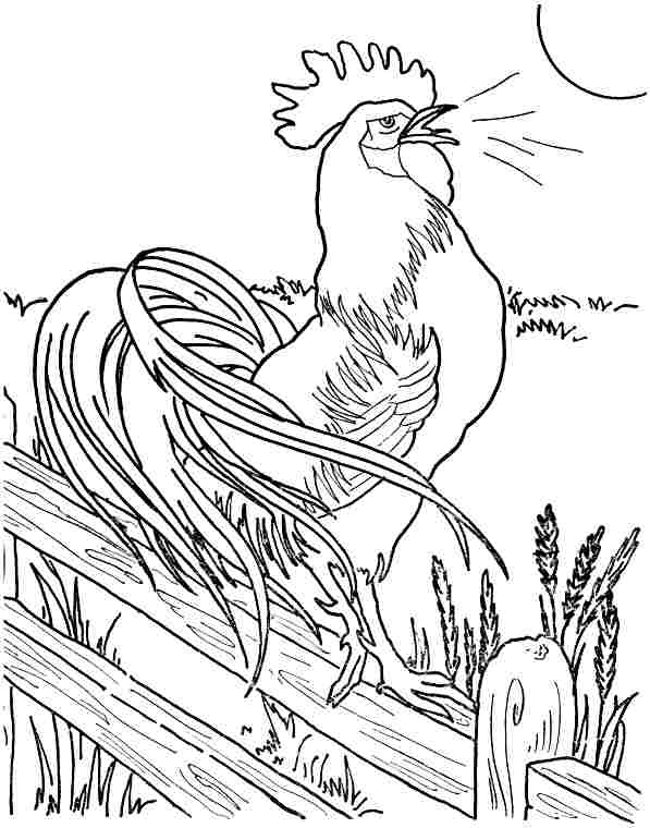 Roosters Coloring Pages - Learny Kids