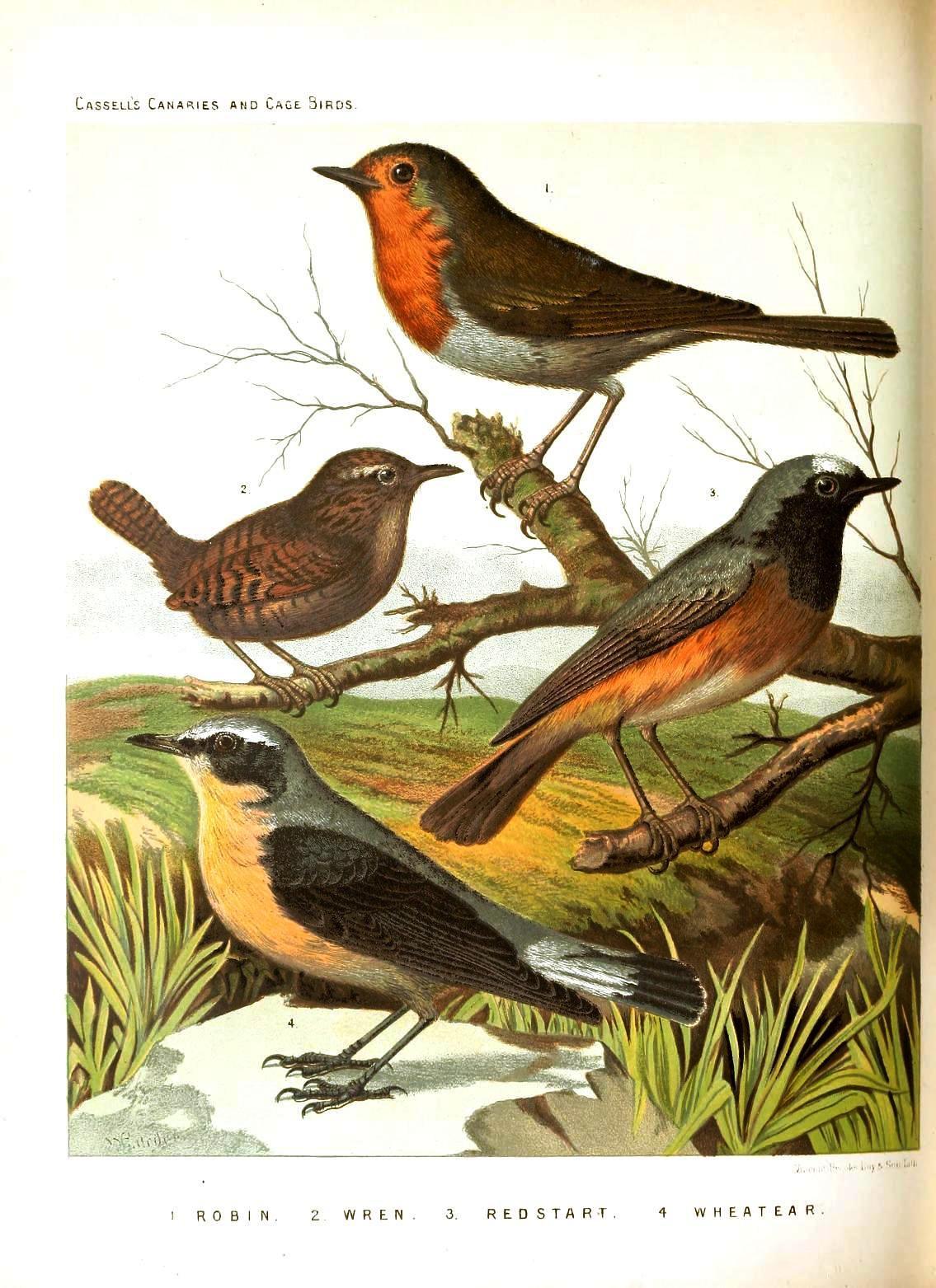 Printable Vintage Bird Cage