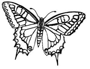 8 Images of Free Printable Butterfly Designs