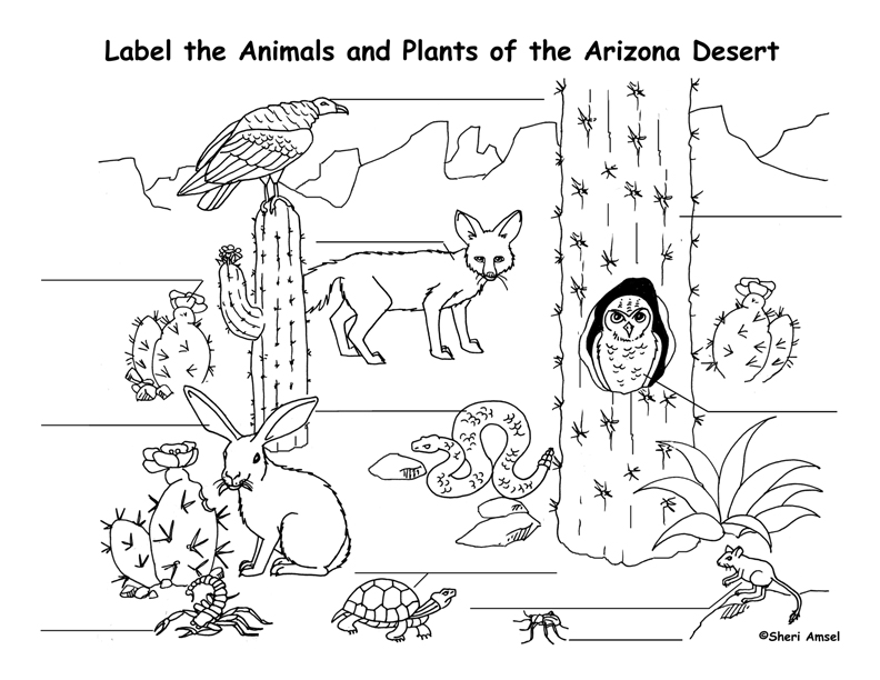 Free printable desert coloring pages ~ Free Printable Desert Coloring Pages Sketch Coloring Page