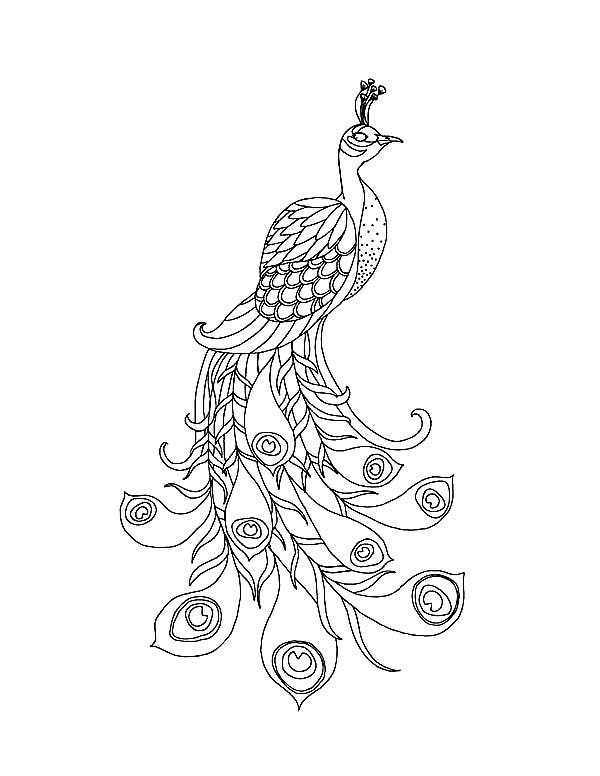 4 Images of Free Printable Peacock Images