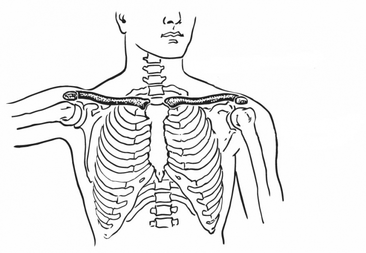 Anatomy Coloring Book By Kaplan : Human muscle coloring pages u2013 citybeauty.info