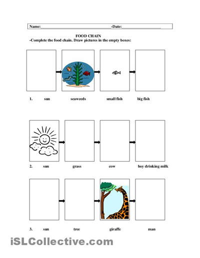 Free food chain worksheets elementary