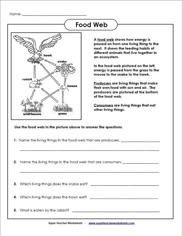 Printables Food Chains Worksheet food chains and webs worksheets woodleyshailene worksheet davezan