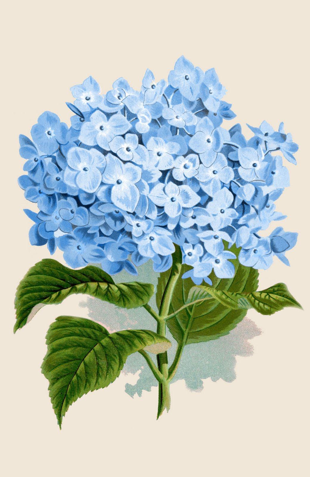 8 Images of Free Printable Botanical Art