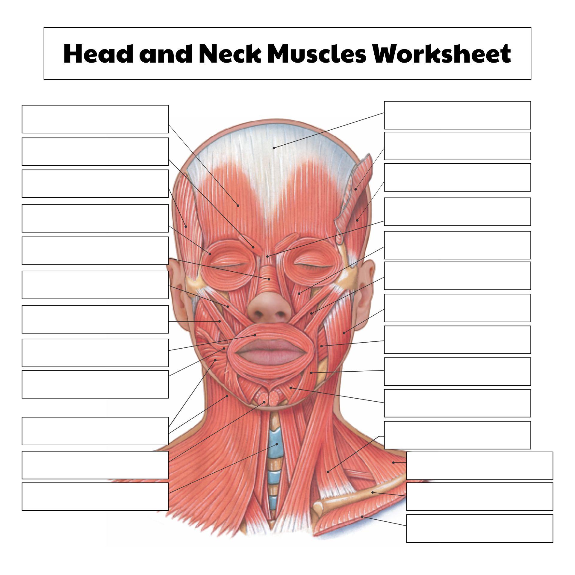 5 Best Images of Printable College Anatomy Worksheets ...