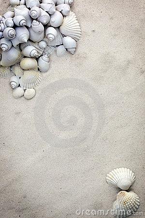 Free Printable Seashell Stationary