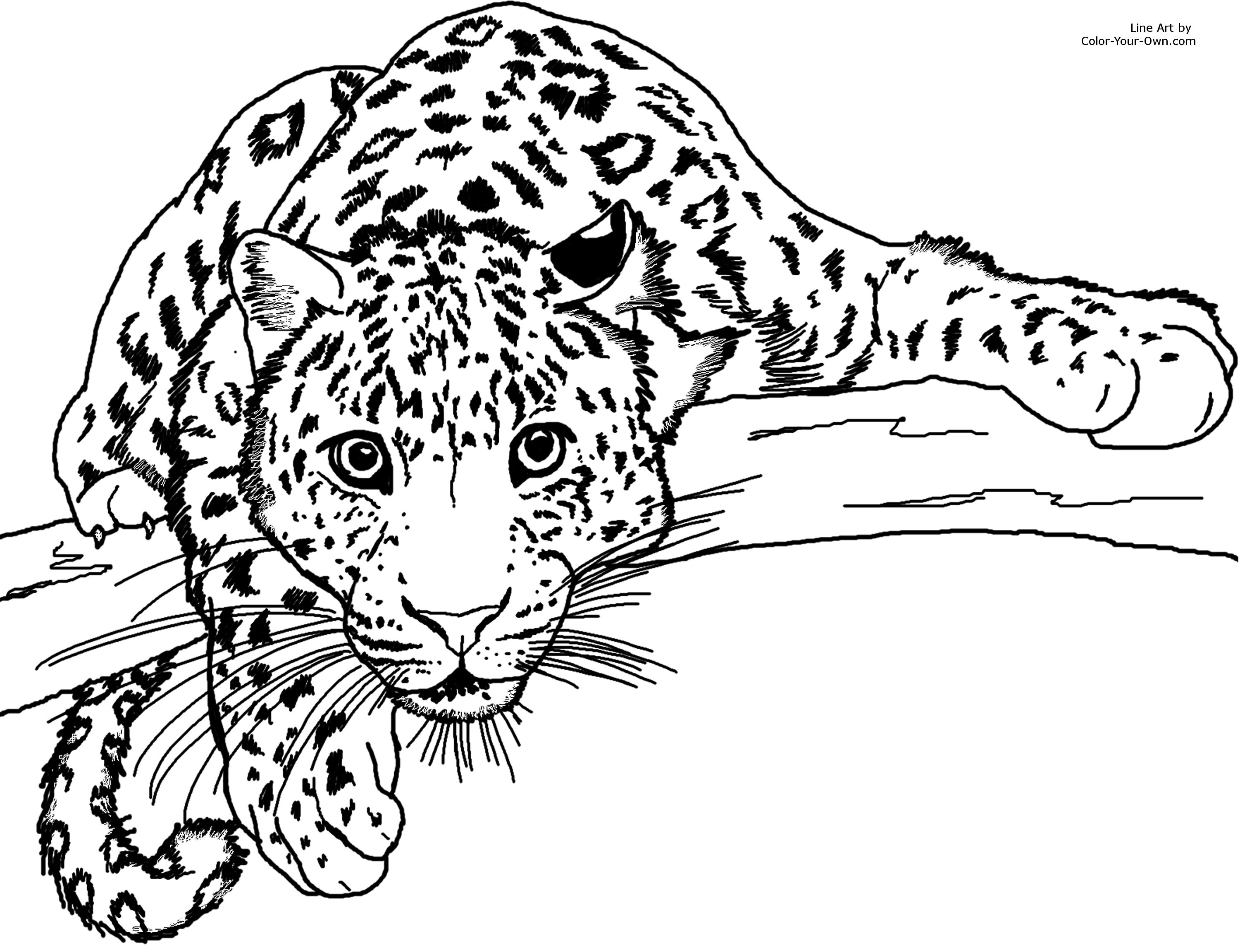 coloring pages 8 x 10 - photo#4