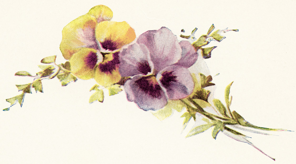 Vintage Pansy Flower Clip Art