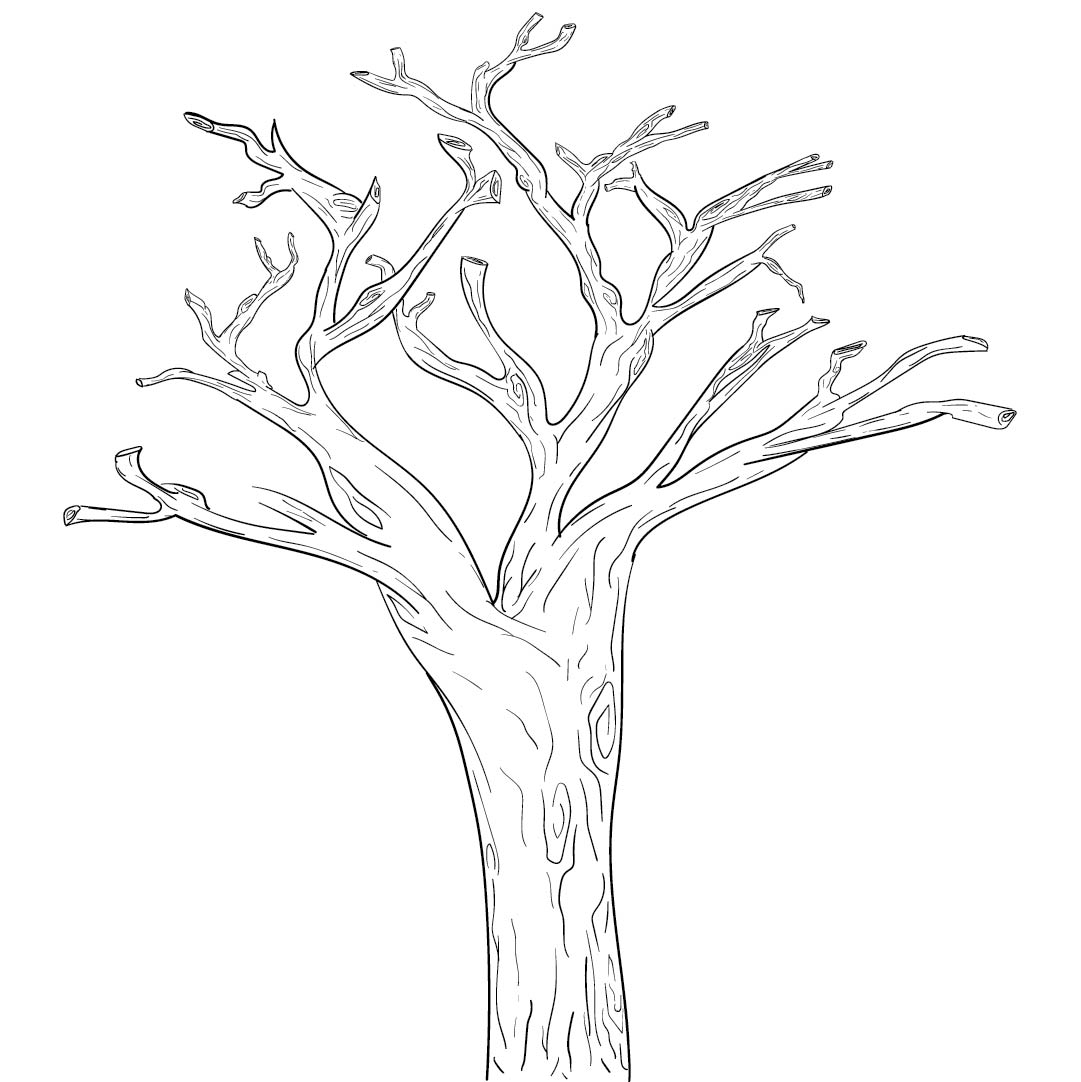 Tree Trunk Coloring Page Pattern