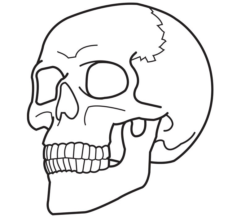 6 Images of Free Printable Pictures Of Skulls