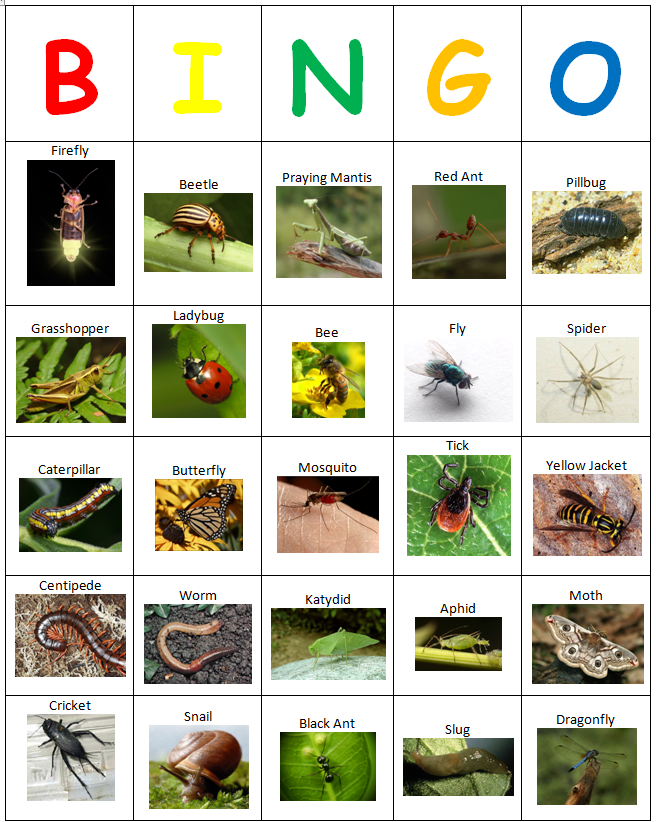 9 Images of Free Insect Bingo Printable