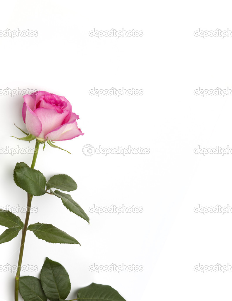5 Images of Single Rose Stationary Printable