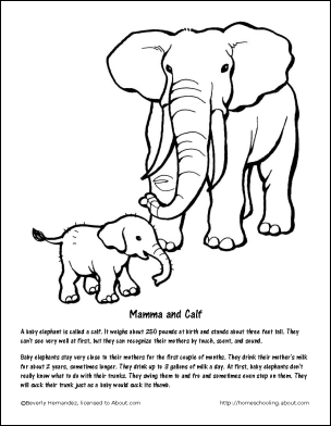 Asian Elephant Coloring Page 73037