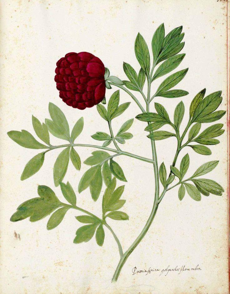 7 Images of Free Vintage Botanical Printables