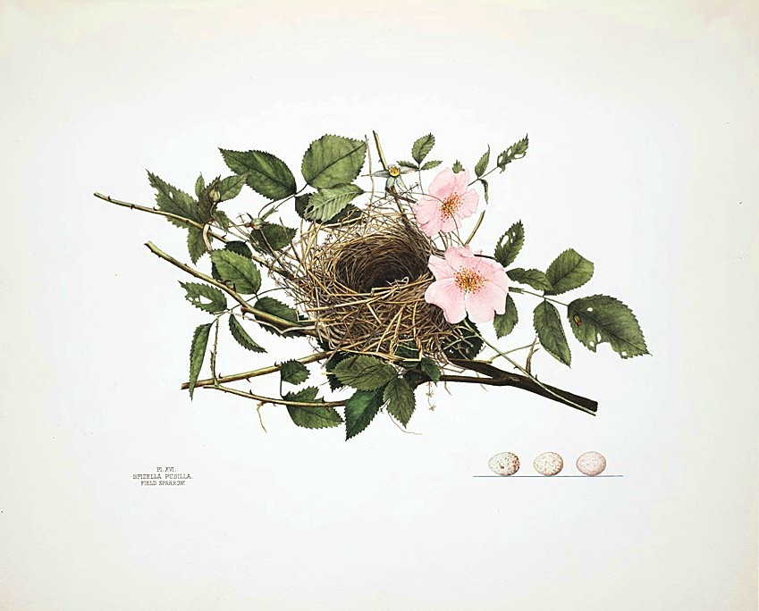 8 Images of Vintage Printable Bird Nest