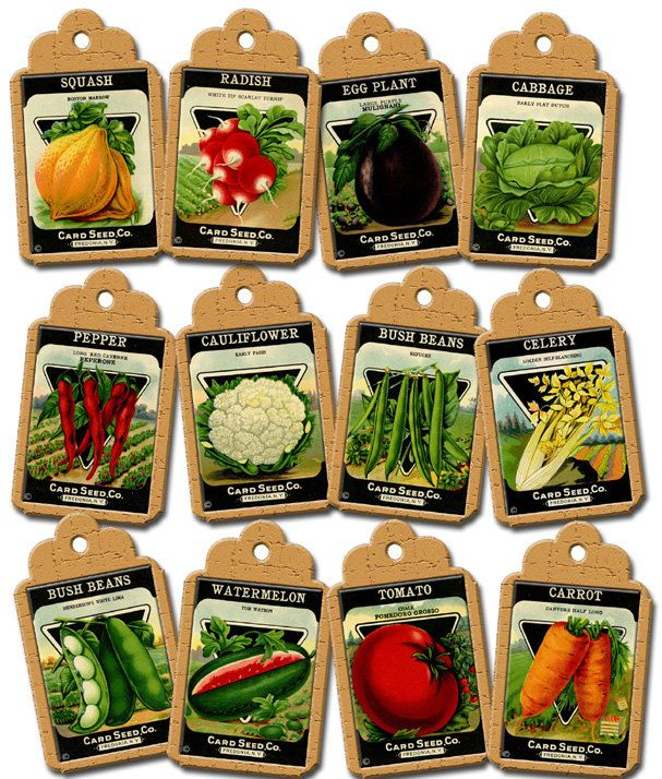 7 Images of Vegetable Graphics Free Vintage Printable