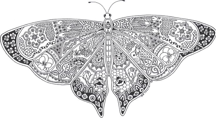 Adult Butterflies Coloring Page