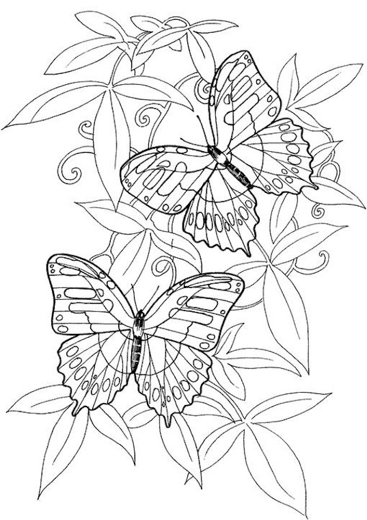 Free Printable Adult Coloring Pages Butterflies
