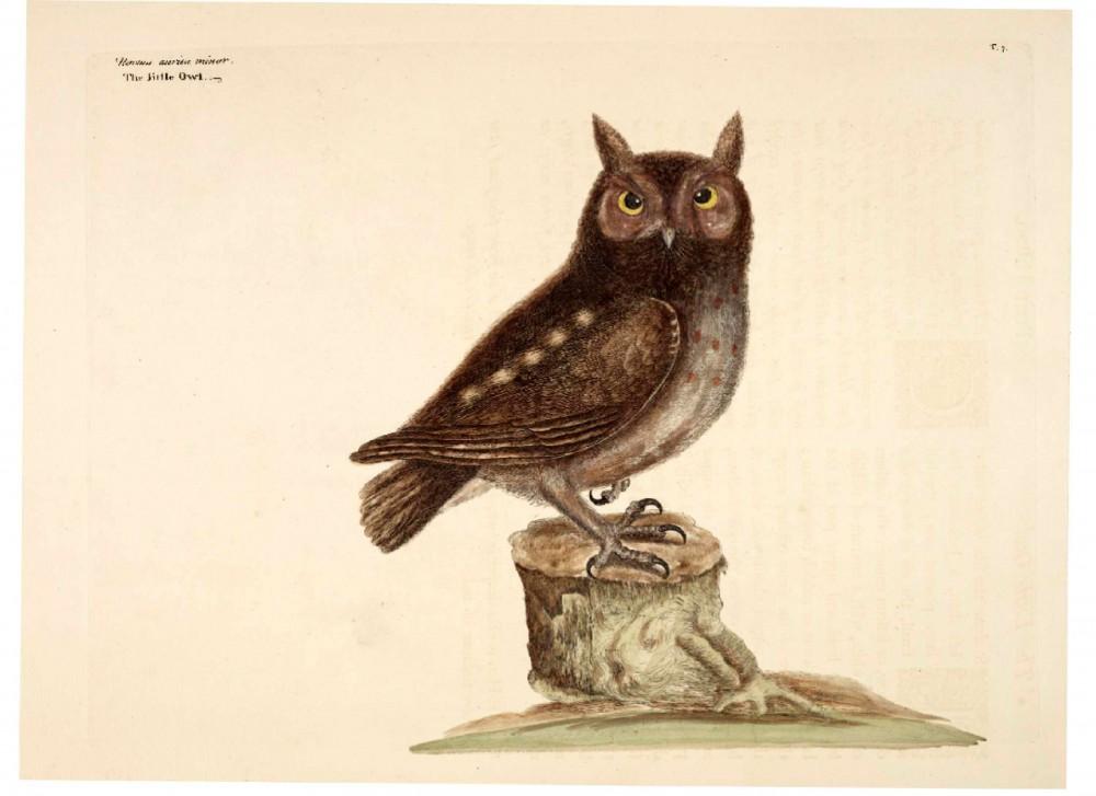 Free Public Domain Vintage Owl