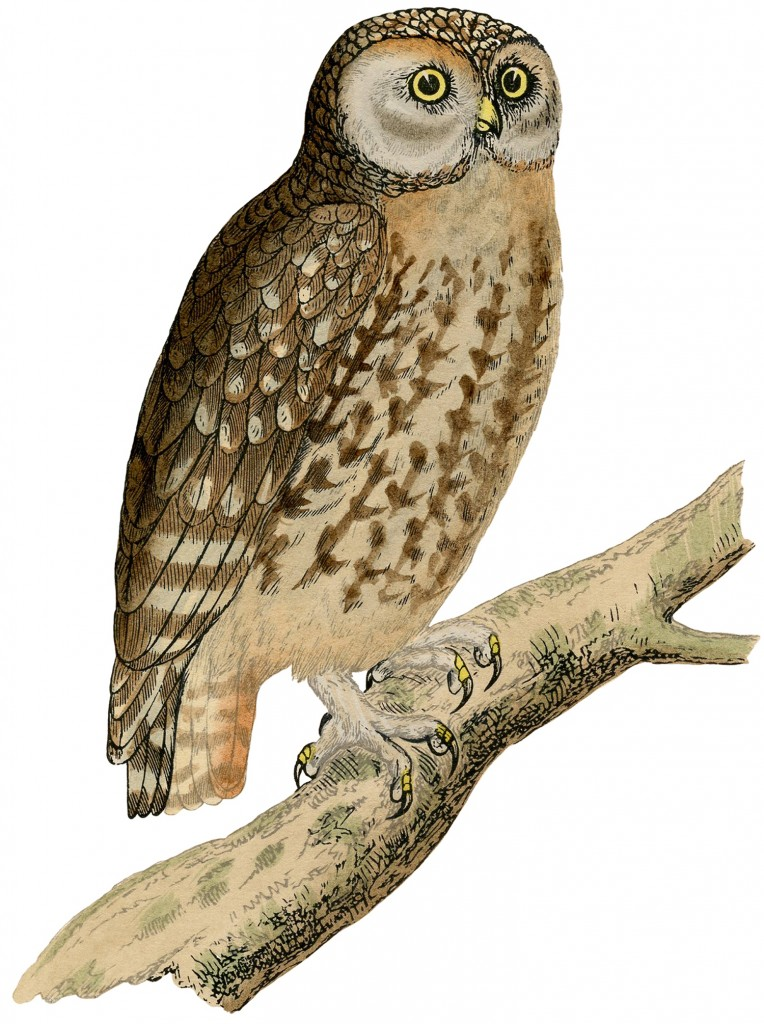 Free Vintage Printables Owl