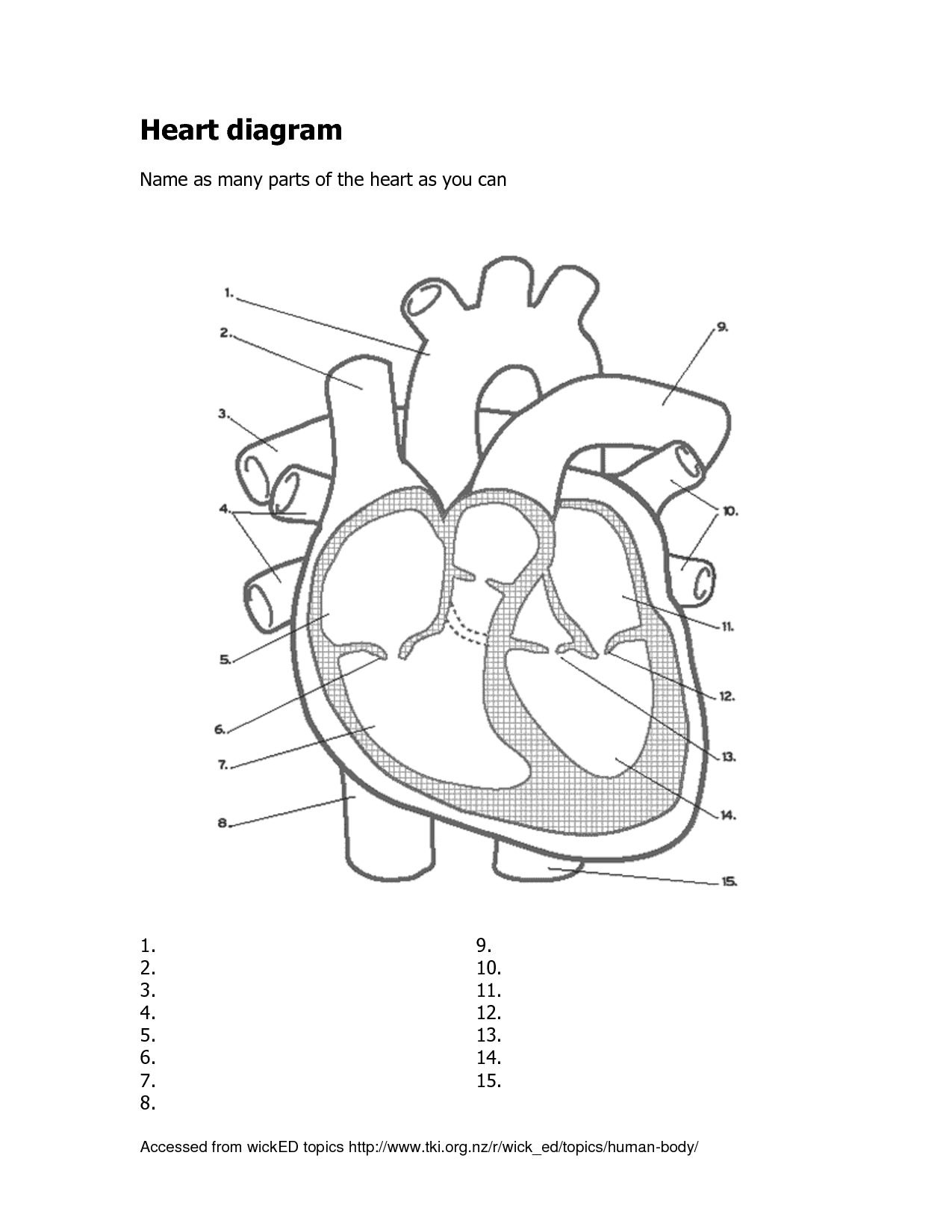 Heart Diagram Worksheet. Virallyapp Printables Worksheets