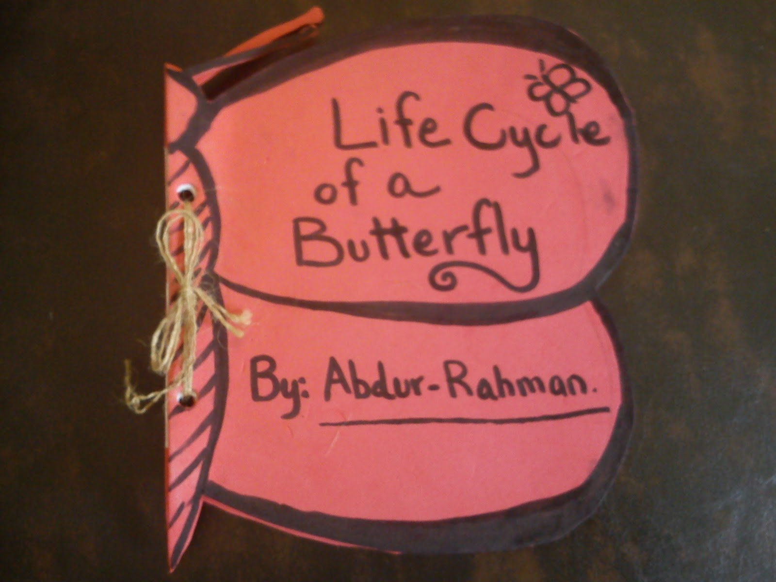 Butterfly Life Cycle Bulletin Board