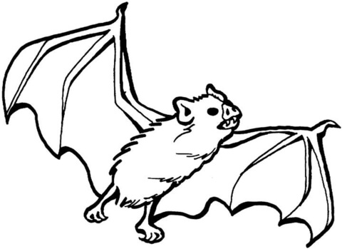 halloween vampire bat coloring pages | Vampire Bat Pages Coloring Pages