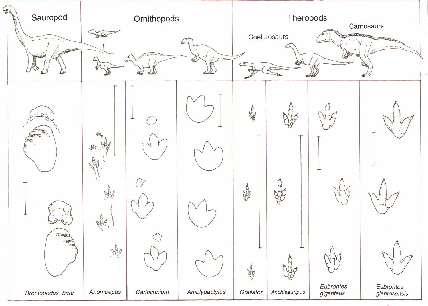 7 Images of Dinosaur Track Printables