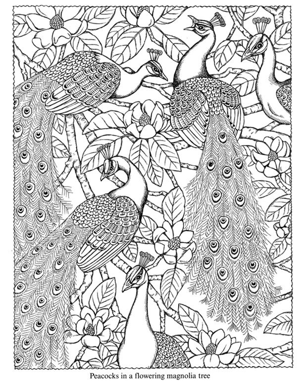 7 Images of Zentangle Peacock Coloring Pages Printable