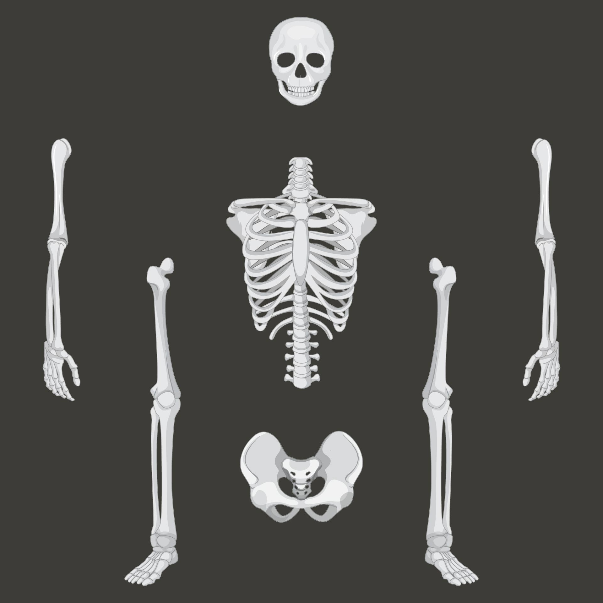 8 Images of Halloween Printable Skeleton Parts