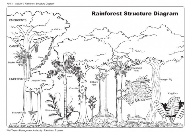 Worksheets Layers Of The Rainforest Worksheet rainforest layers worksheet intrepidpath 6 best images of the printable