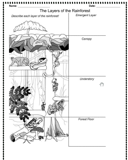 6 Images of Of The Rainforest Layers Printable