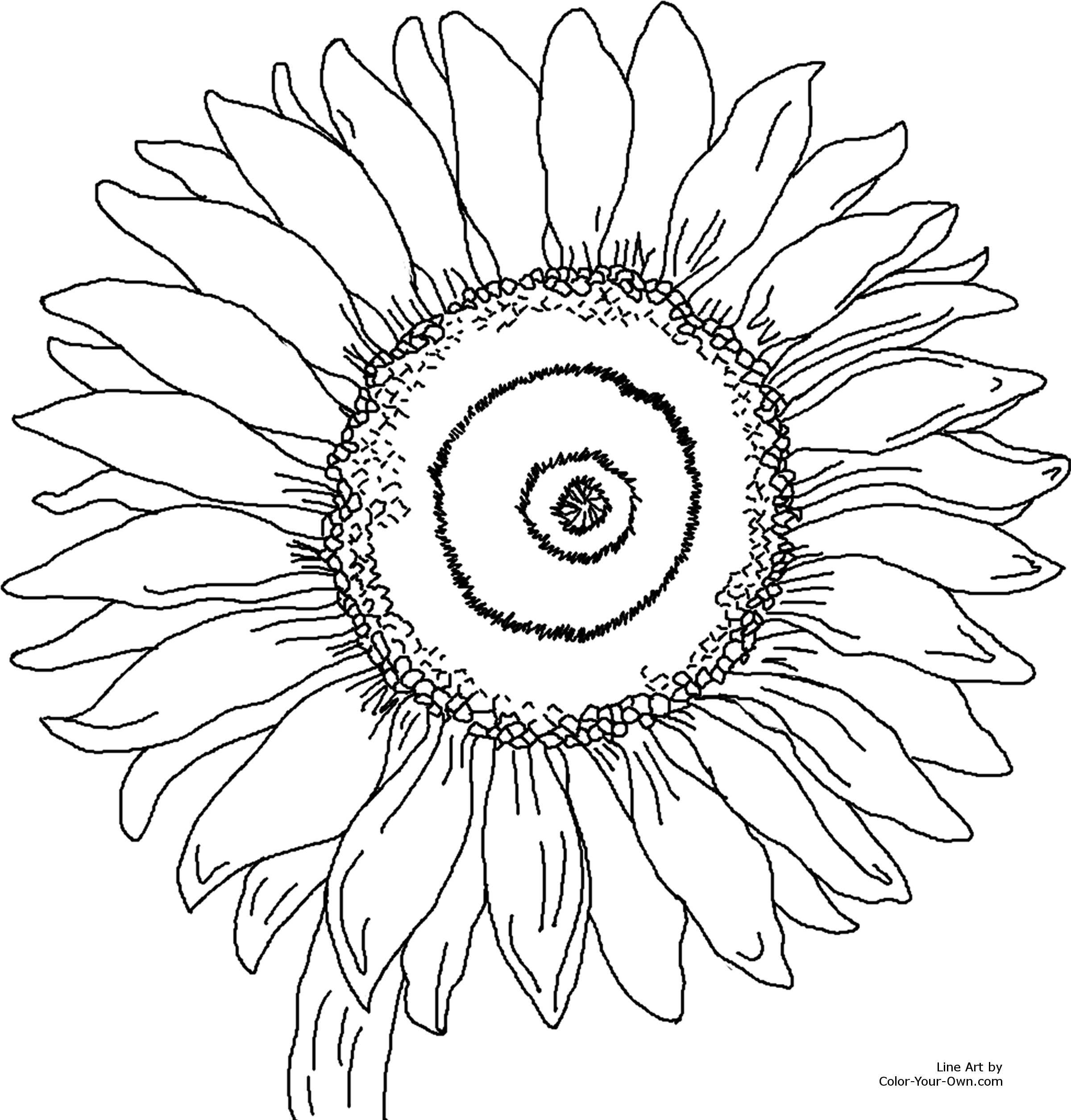 5 Images of Sunflower Coloring Pages Printable