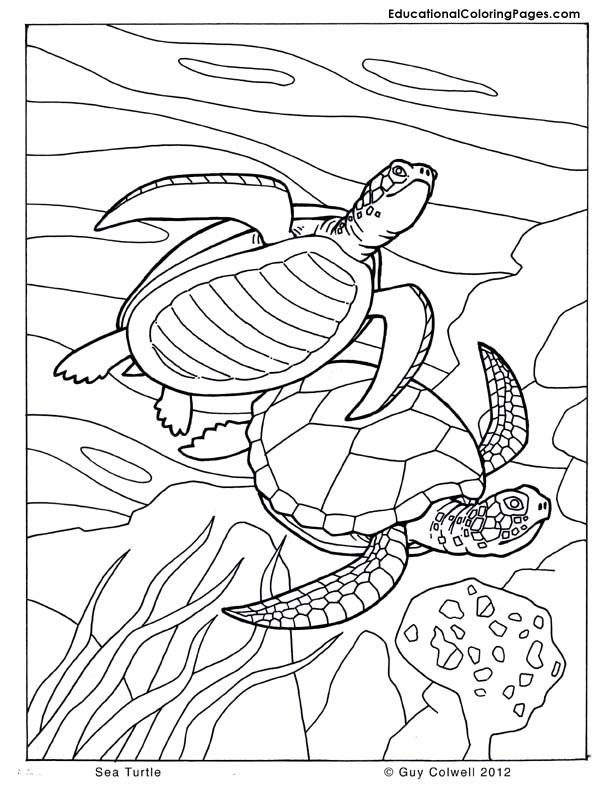 6 Images of Sea And Birds Coloring Pages Printable
