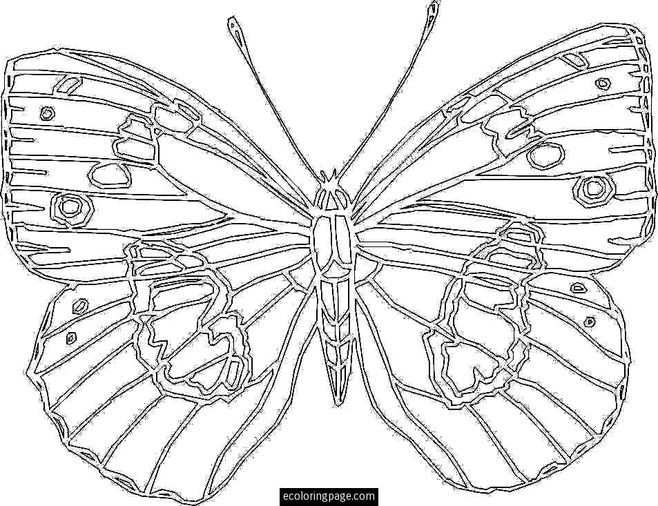 8 Best Images Of Large Printable Coloring Sheets