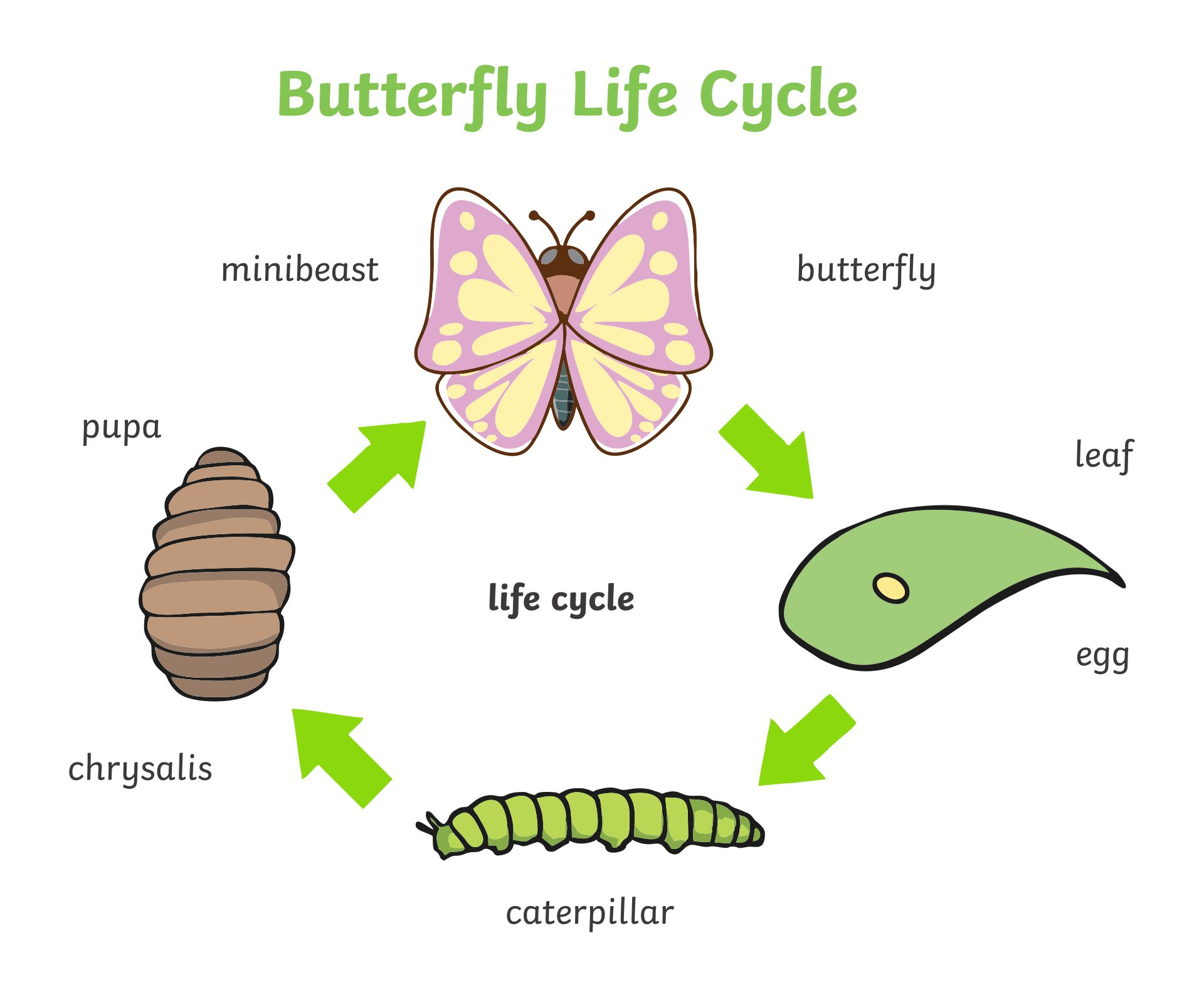 Life Cycle a Butterfly Egg On Leaf