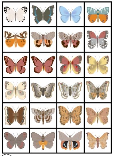6 Best Images of Kindergarten Activity Butterfly Handwriting ...